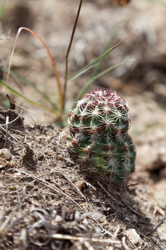 Photo of Barrel cactus