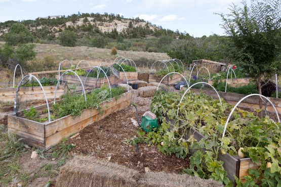 Photo of eight raised beds