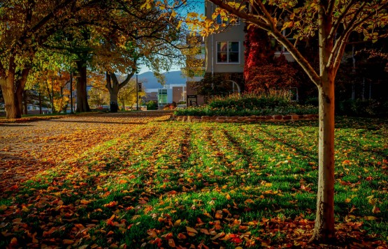 Loux wins fall photo contest