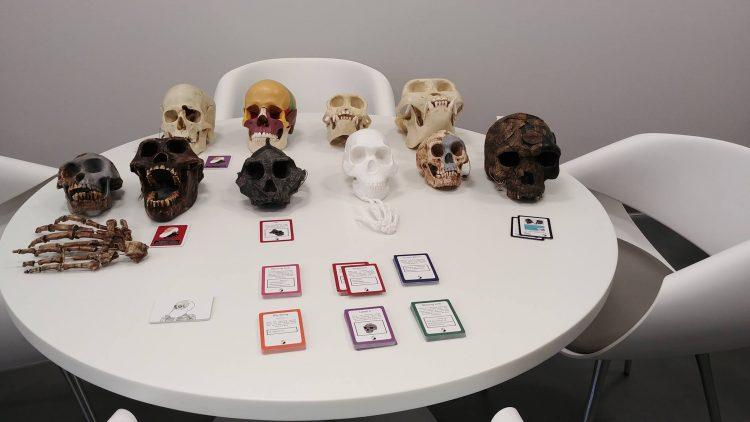 Plaster molds of primate skulls