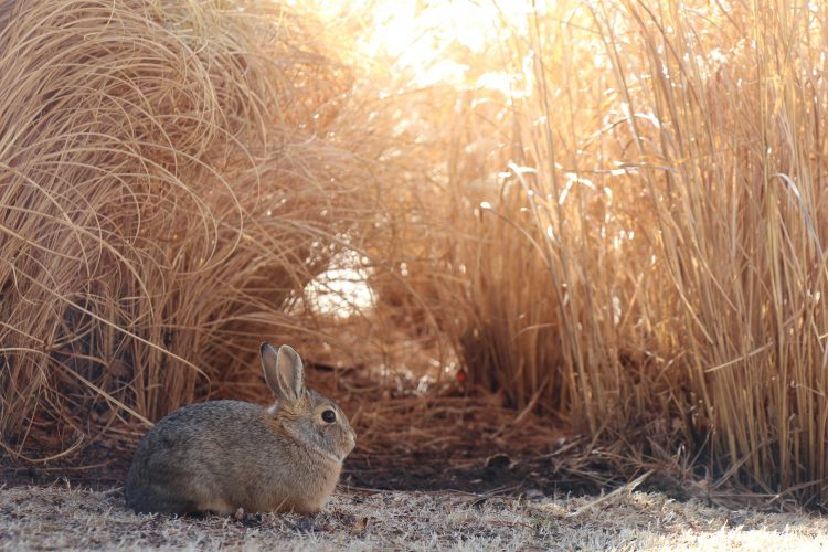 Rabbit in the morning