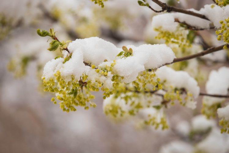 May snow falls