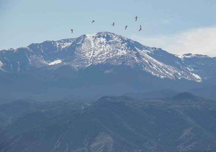 Gulls fly with the peak