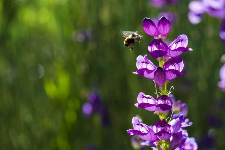 Busy Bees at the UCCS Farm