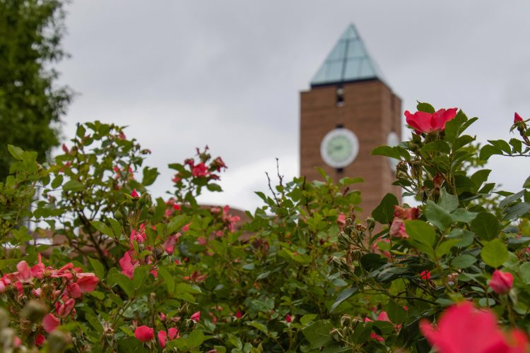 Flowers brighten up a cloudy day on July 22.