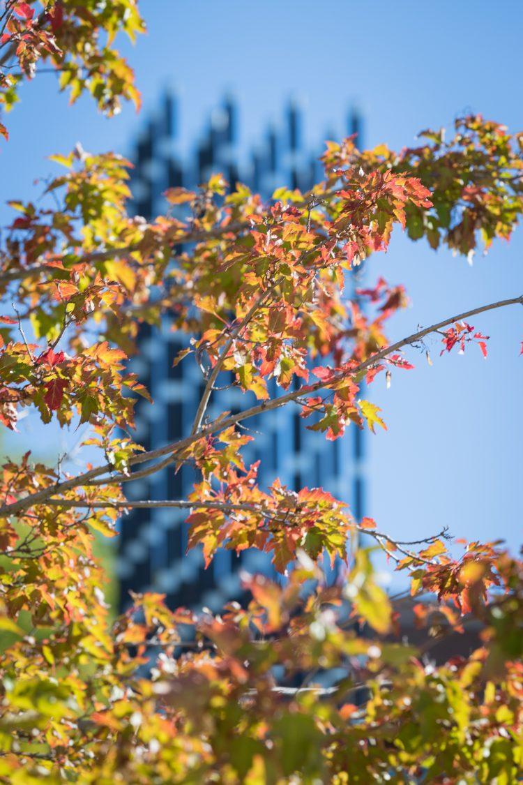Leaves turning on El Pomar Plaza
