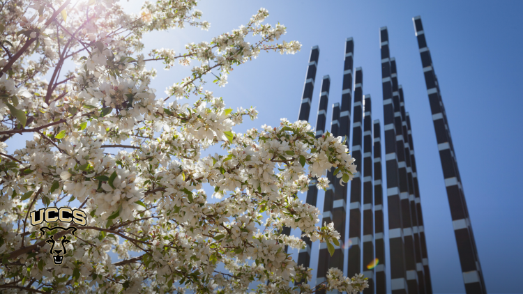 Trees blooming on campus with an art sculpture in the background in front of the Engineering and Applied Science building