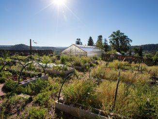 The sun shining on the UCCS farm