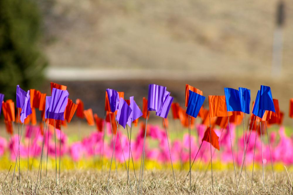Photos of flags on display in grass.